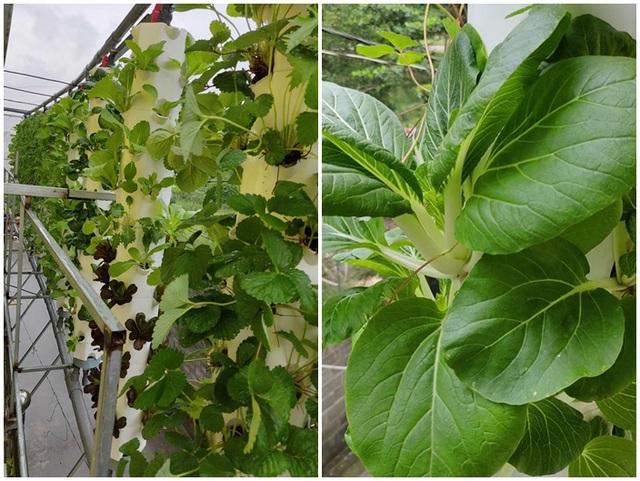 Cảnh trồng rau, nuôi gà, thả cá trên sân thượng của những nông dân phố - 9