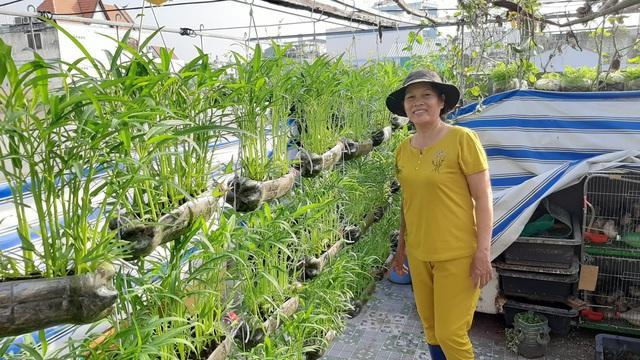 Cảnh trồng rau, nuôi gà, thả cá trên sân thượng của những nông dân phố - 8