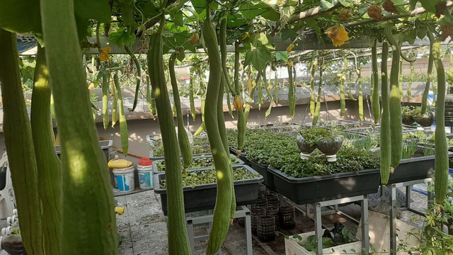 Cảnh trồng rau, nuôi gà, thả cá trên sân thượng của những nông dân phố - 5