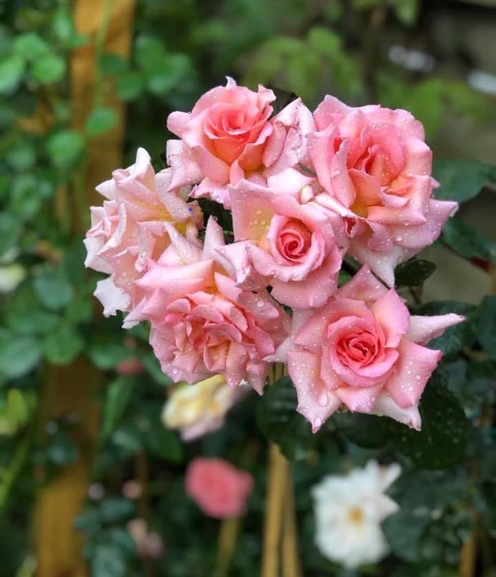 Sửng sốt khu vườn 100m2 tràn ngập hoa trái của mẹ Việt ở Hà Lan - 5