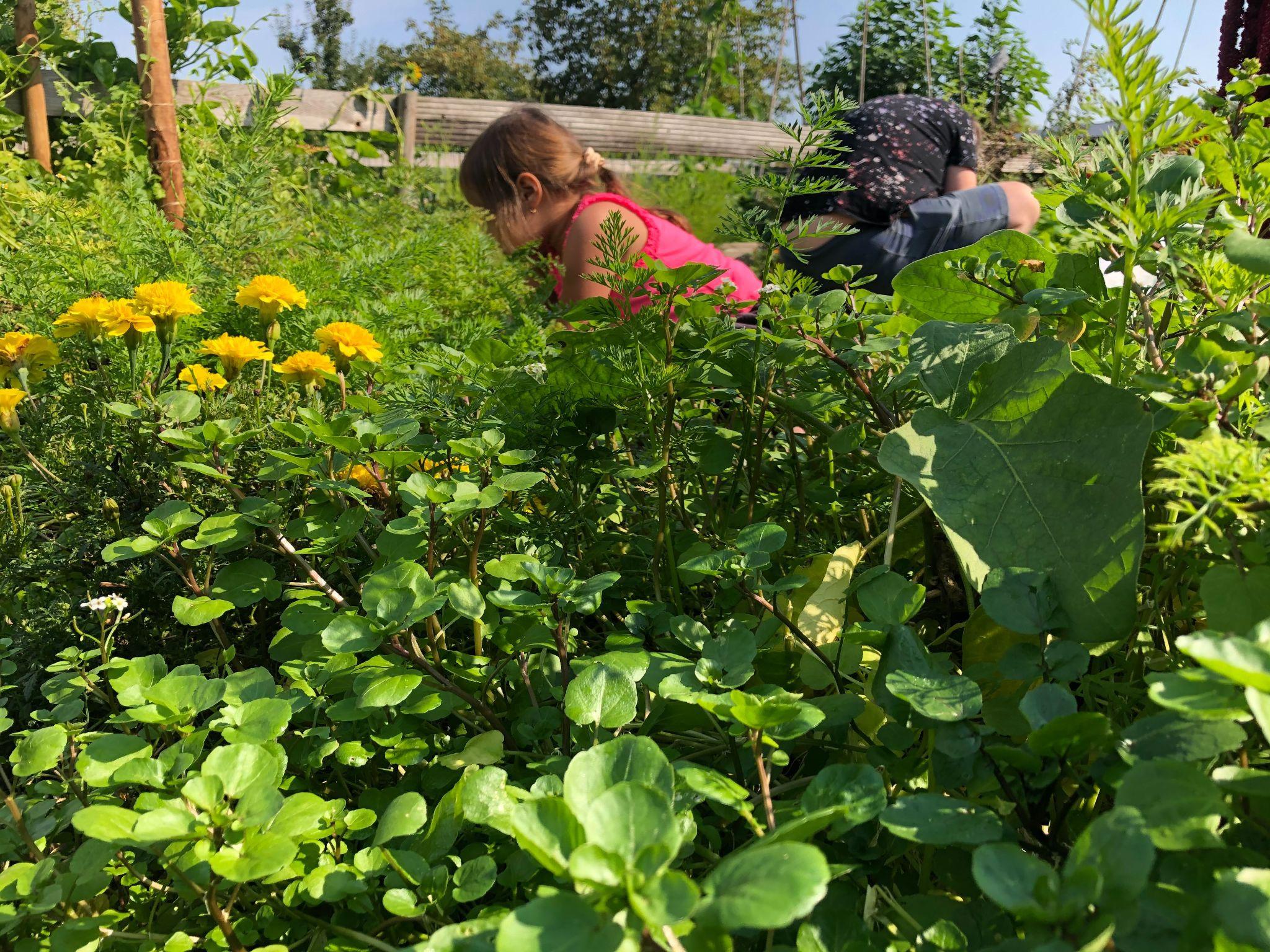 Sửng sốt khu vườn 100m2 tràn ngập hoa trái của mẹ Việt ở Hà Lan - 11