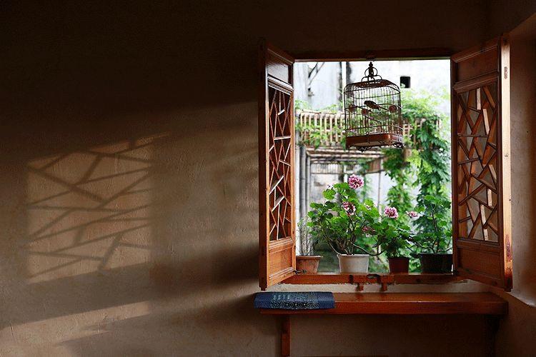 Cặp vợ chồng bỏ việc, bán nhà phố về quê chăm hoa, trồng rau sạch - 9