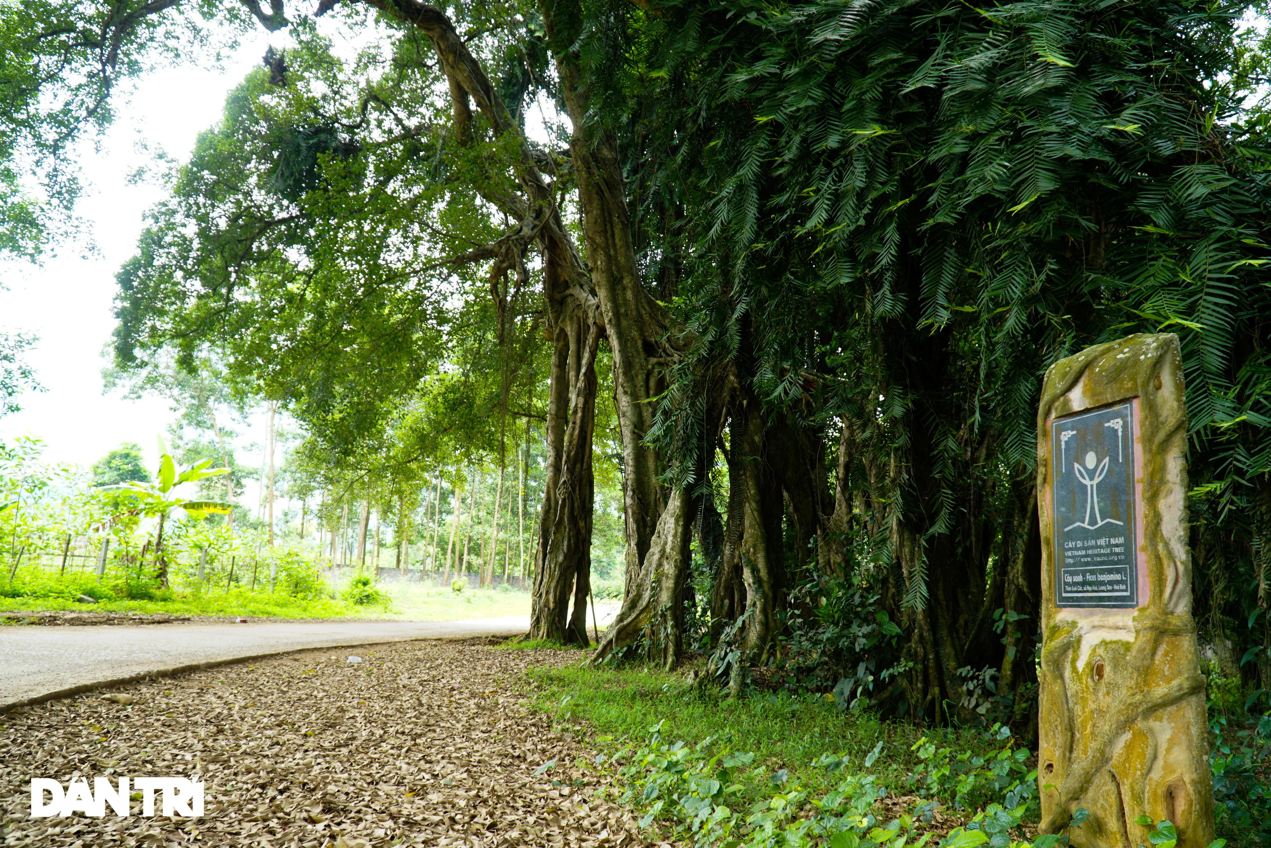 Tận mắt thấy cây ma làng tồn tại hơn 8 thế kỷ ở Hòa Bình - 5