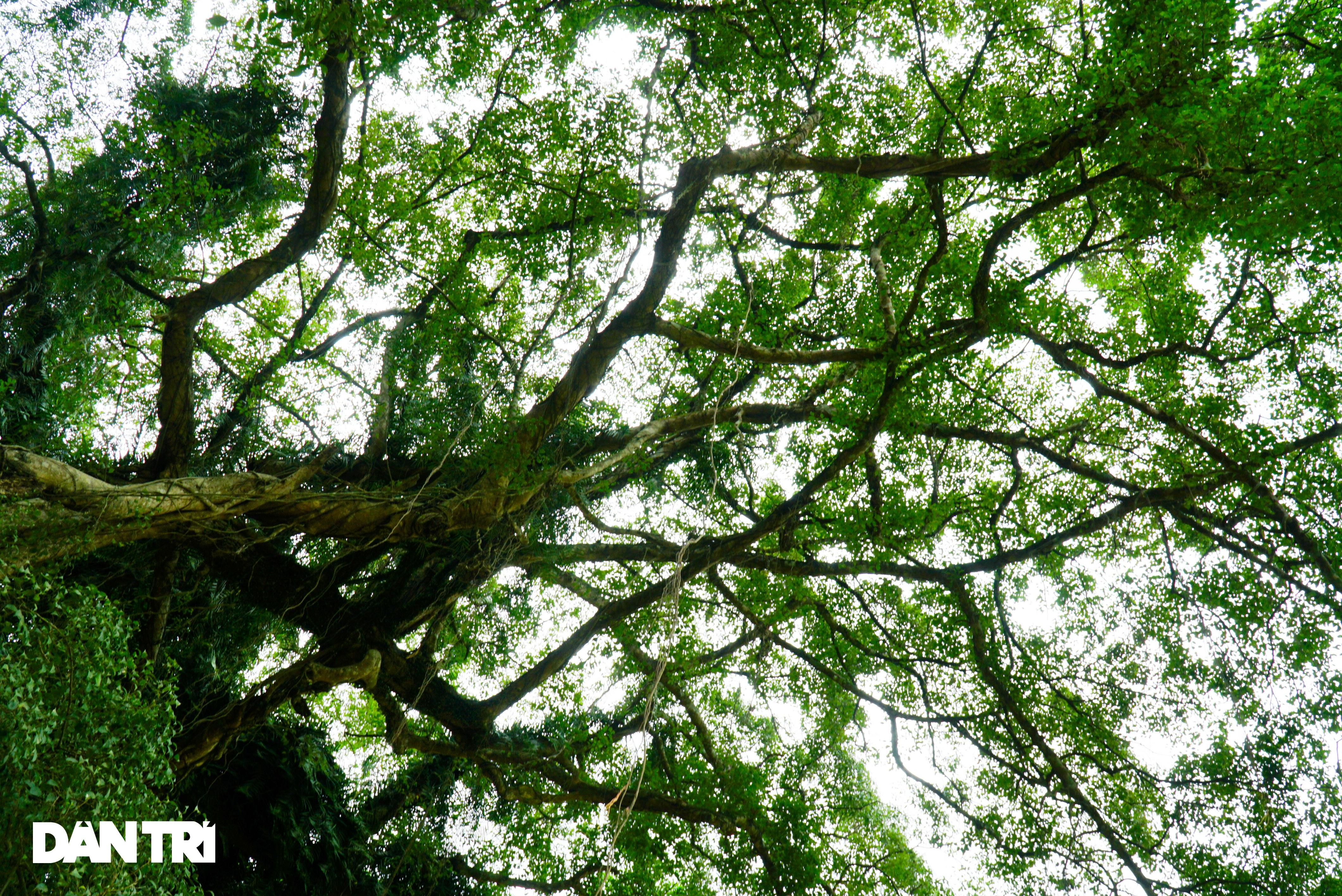 Tận mắt thấy cây ma làng tồn tại hơn 8 thế kỷ ở Hòa Bình - 7