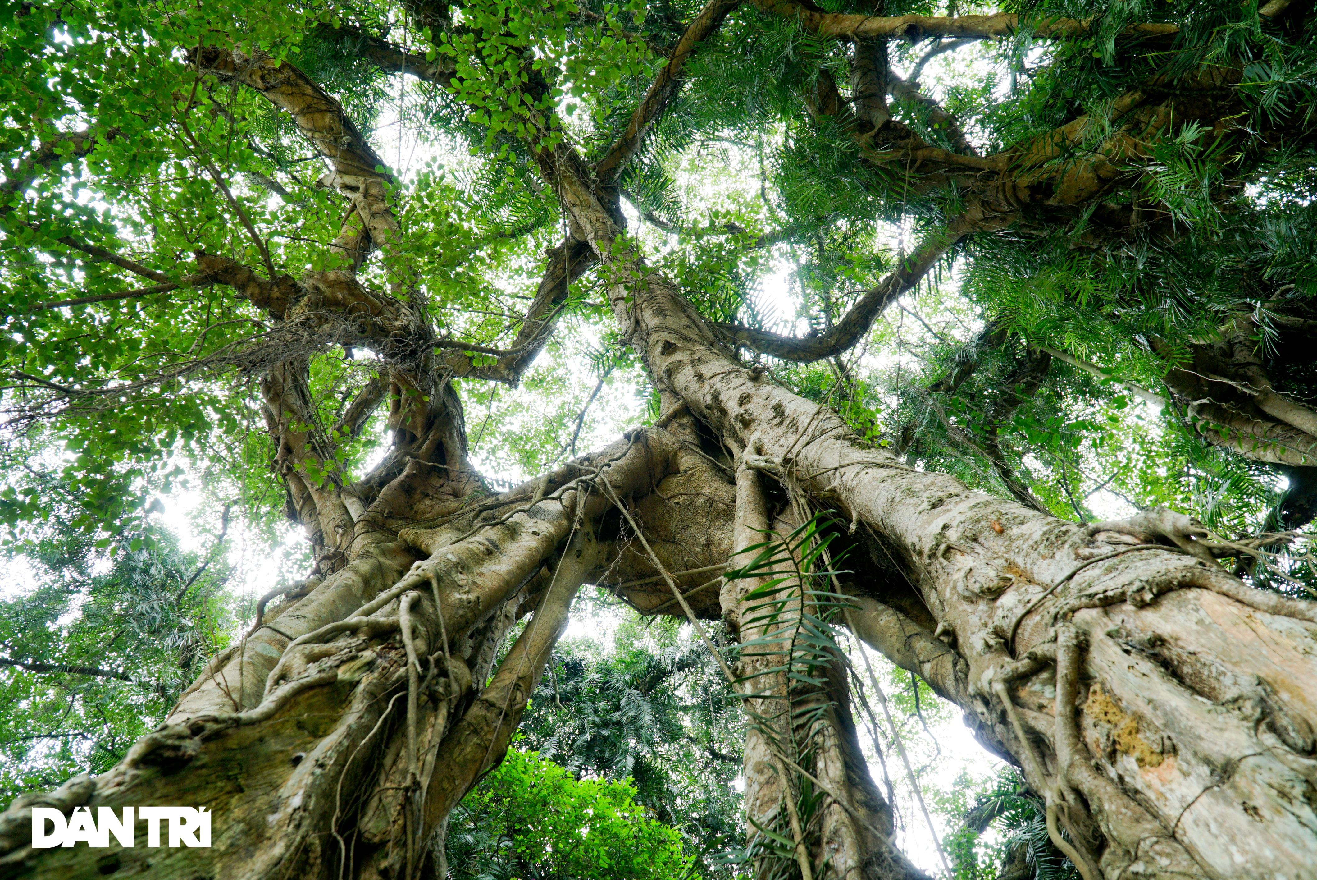 Tận mắt thấy cây ma làng tồn tại hơn 8 thế kỷ ở Hòa Bình - 9