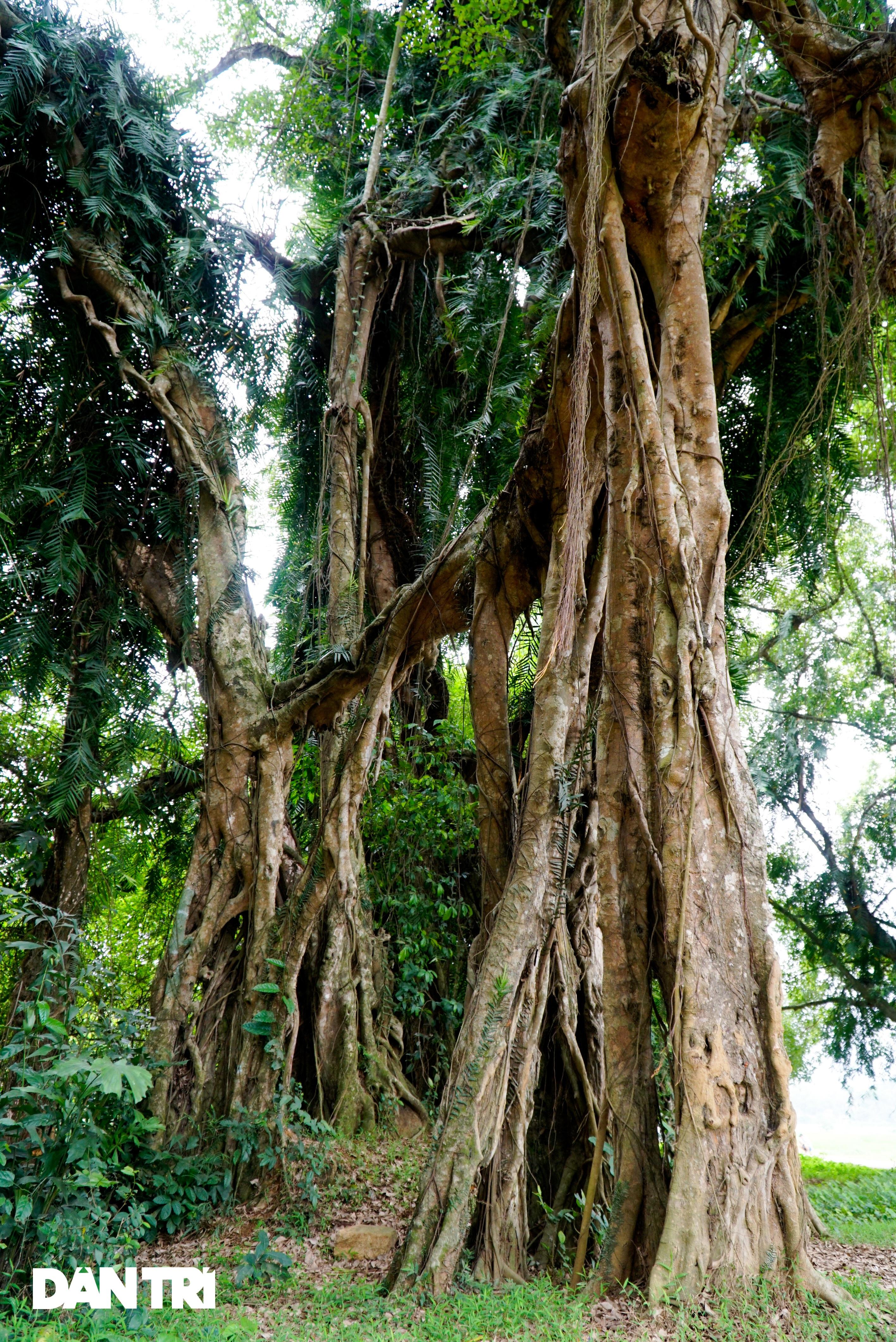 Tận mắt thấy cây ma làng tồn tại hơn 8 thế kỷ ở Hòa Bình - 6