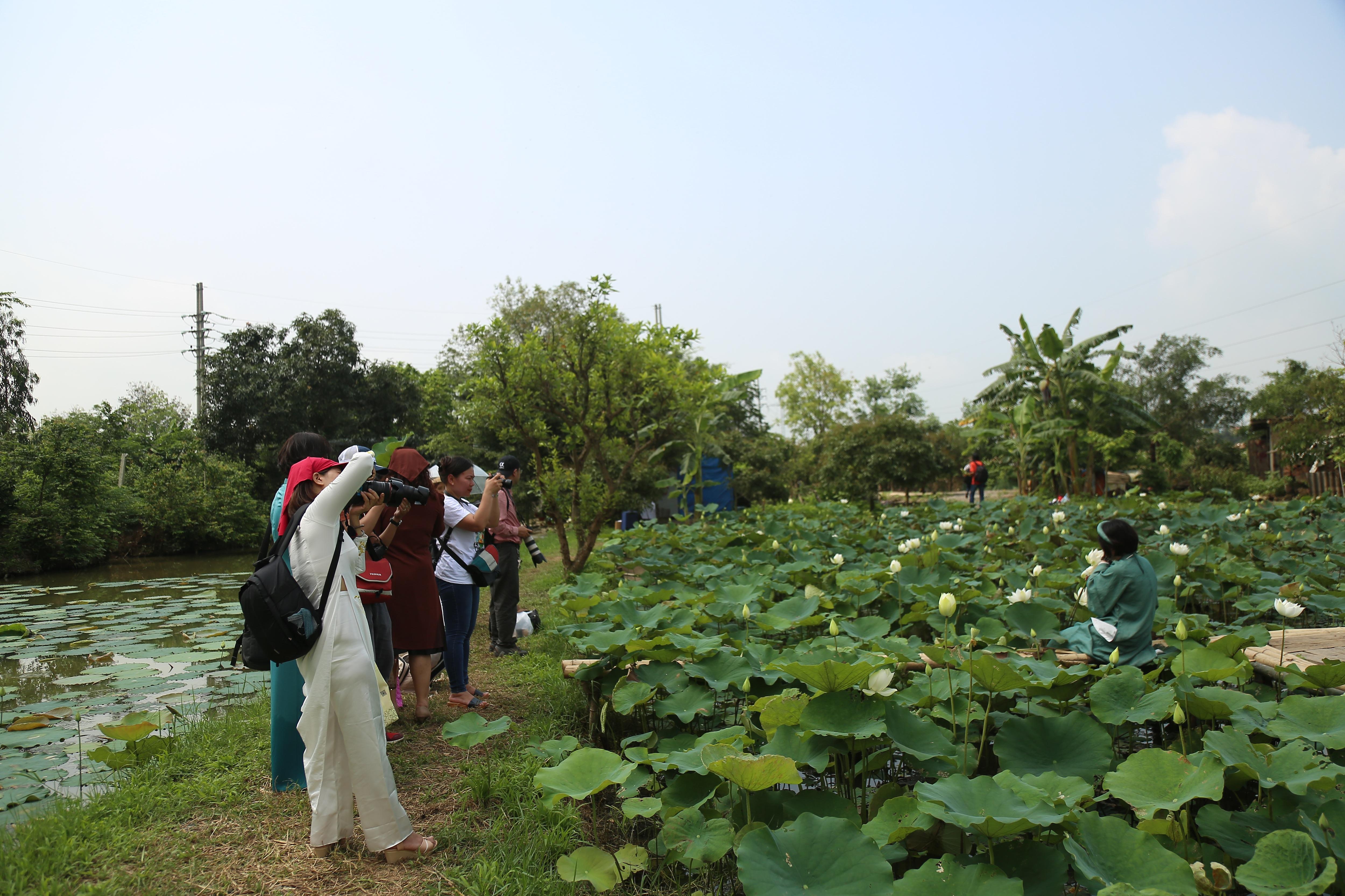 Hà Nội: Kiếm tiền triệu từ nghề trồng hoa sen trắng - 1