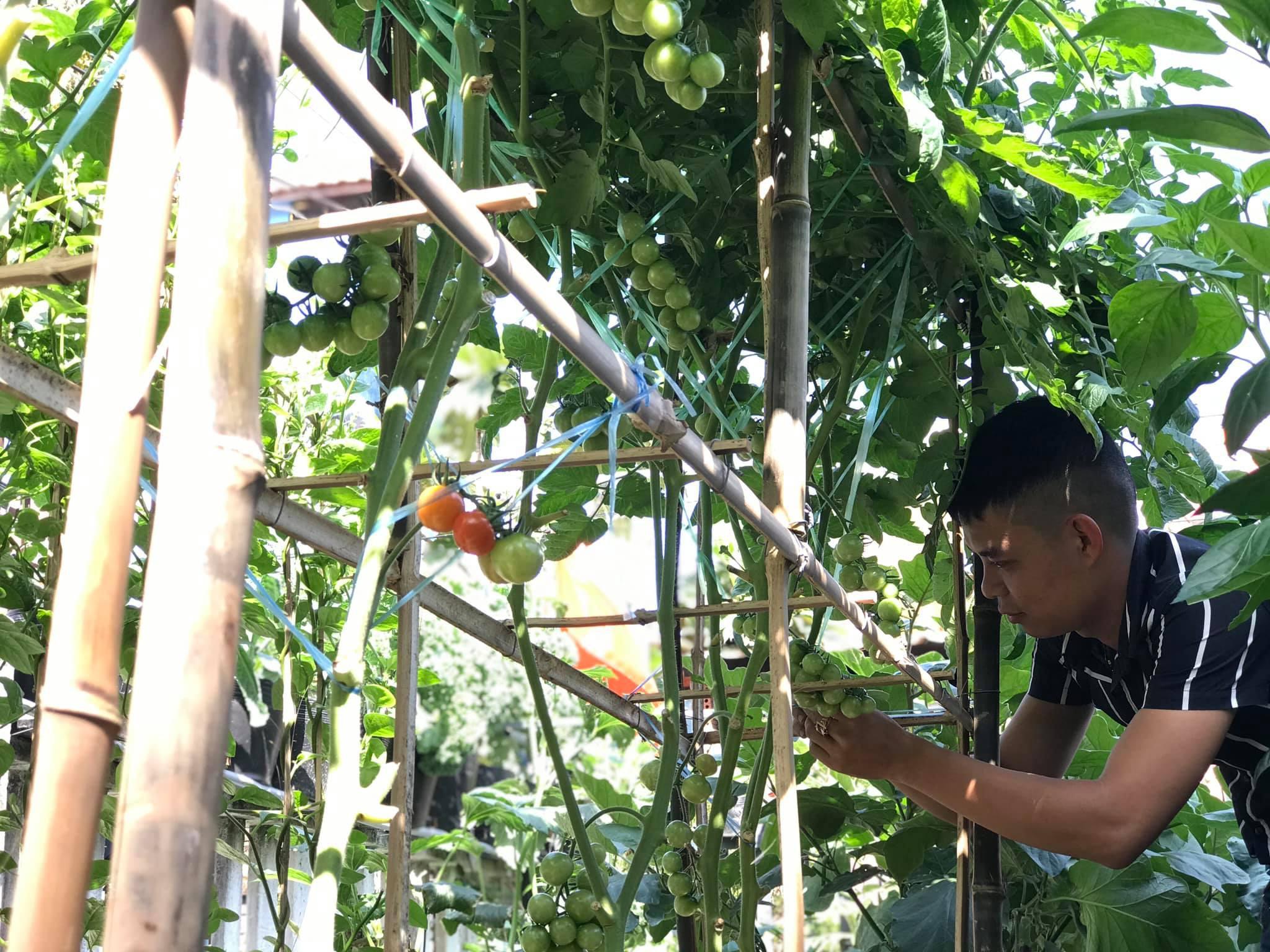 Vườn 60m2 đủ loại rau trái, vợ chồng trẻ ở Quảng Nam không phải đi chợ - 3