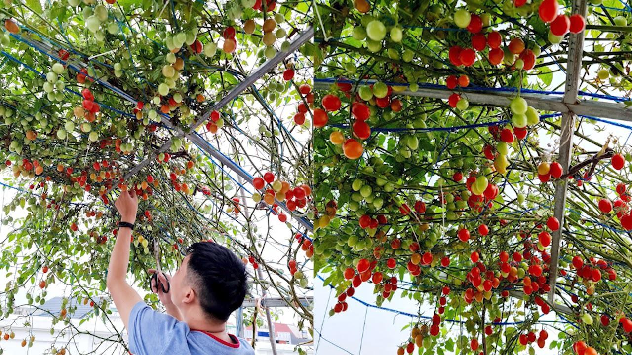 Mẹ đảm Hải Phòng vác đất lên sân thượng, tự tạo nông trại hữu cơ xanh tốt - 7