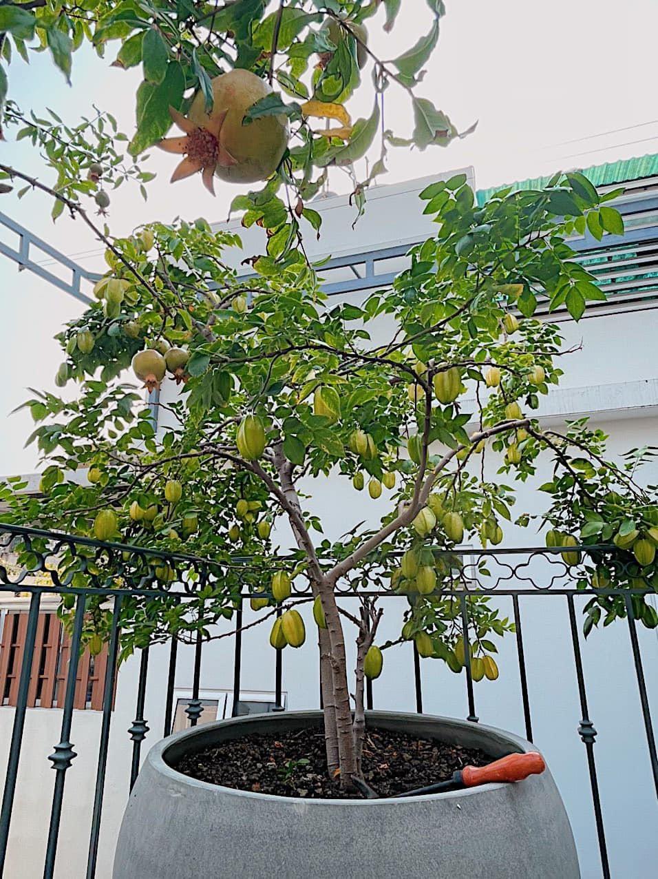 Mát mắt với nhà phố ở Sài Gòn ngập cây xanh, trĩu trịt hoa trái - 6