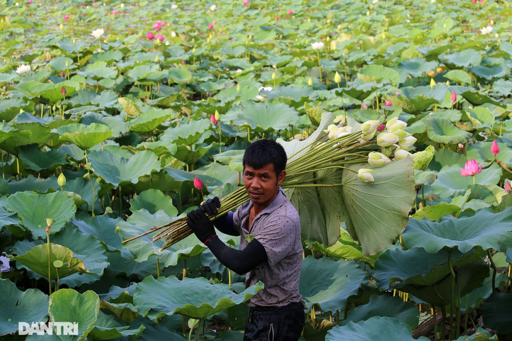 Thăm đầm sen ở Hà Nội có đến 167 loài, đa dạng nhất Việt Nam - 2