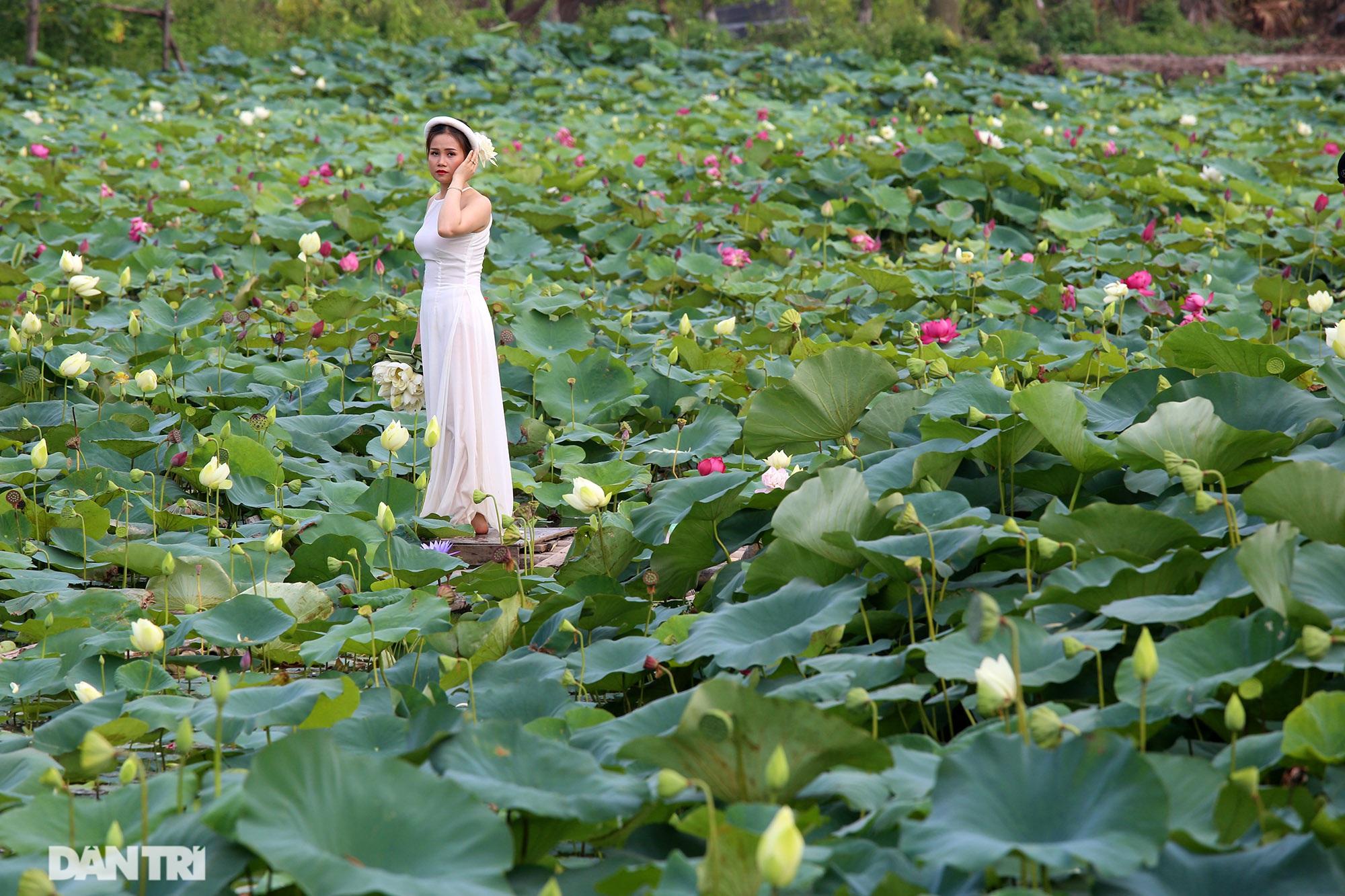 Thăm đầm sen ở Hà Nội có đến 167 loài, đa dạng nhất Việt Nam - 4