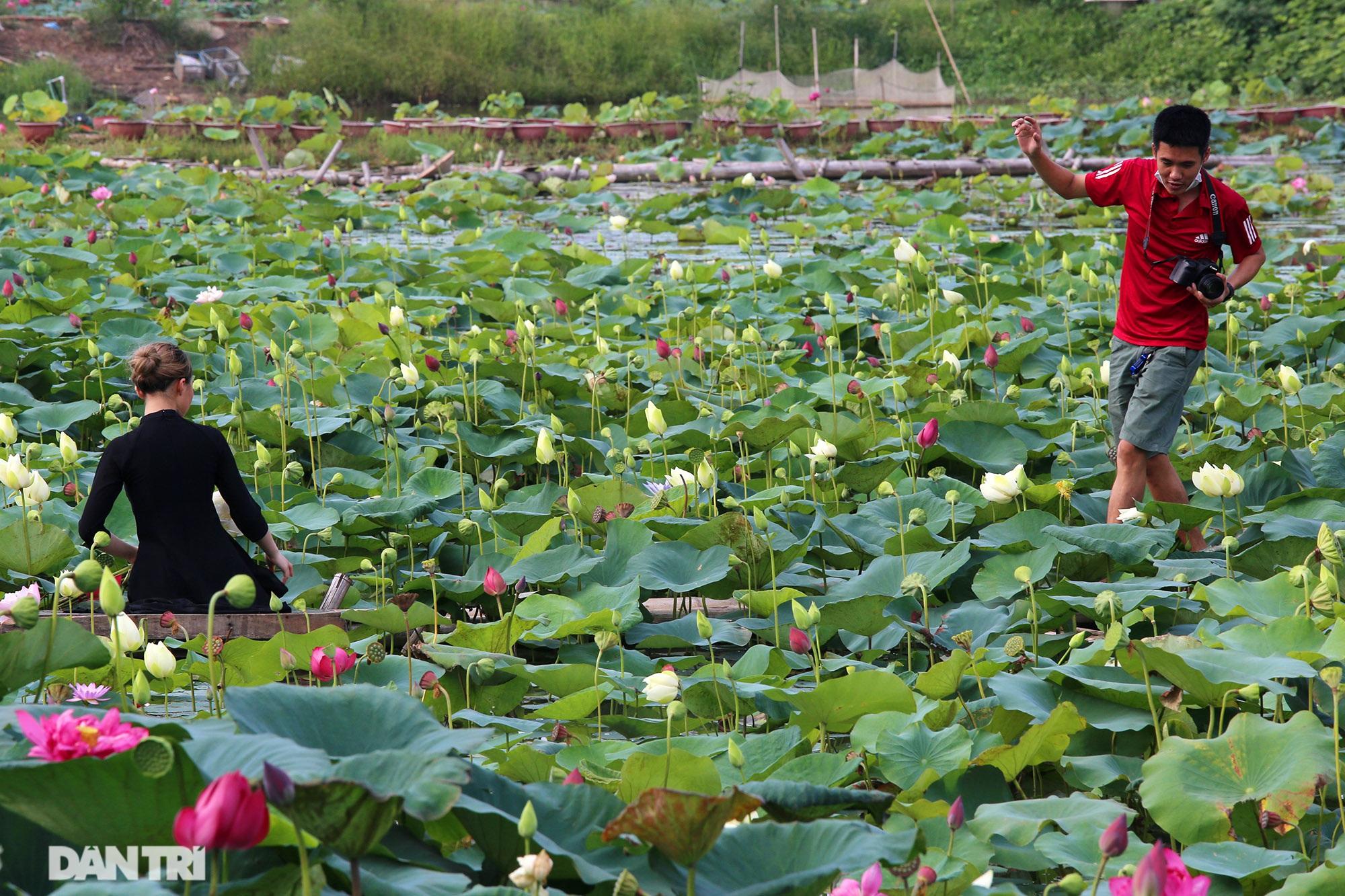 Thăm đầm sen ở Hà Nội có đến 167 loài, đa dạng nhất Việt Nam - 9