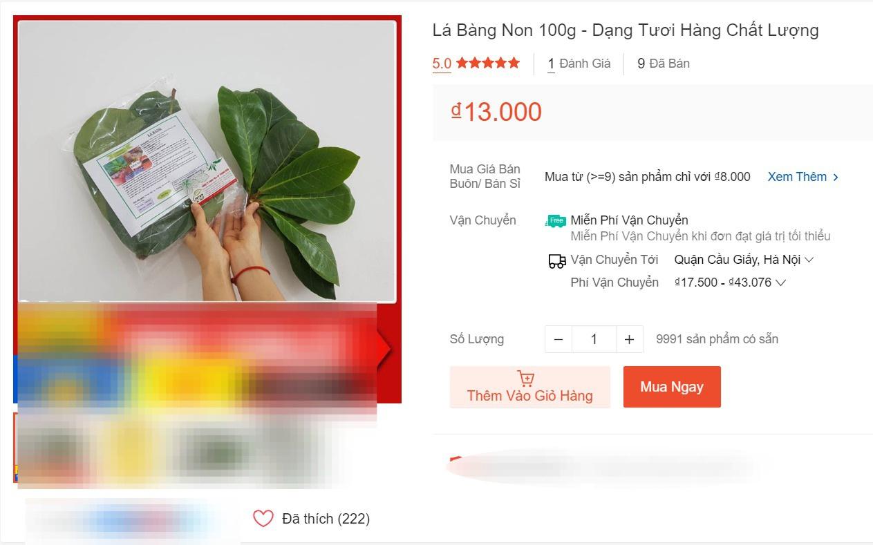Hết lá khô 1.000 đồng, đến lượt lá bàng tươi được hét giá 100.000 đồng/kg - 1