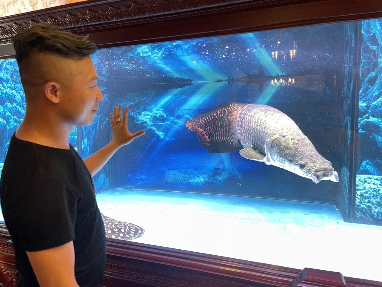 Nuôi quái vật sông Amazon, thú chơi vương giả của đại gia Việt - 4
