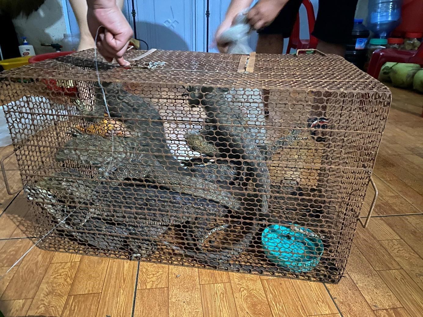 Bị phạt hơn một tỷ đồng vì trong nhà có 8 con kỳ đà - 1