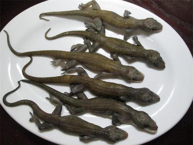 Đặc sản từ một loài vật kinh dị ít ai ngờ tới, hương vị lại thơm ngon - 2