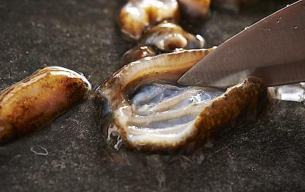 Lạ lùng loại nhân sâm biển càng xấu càng đắt, có giá tới 68 triệu đồng/kg - 4