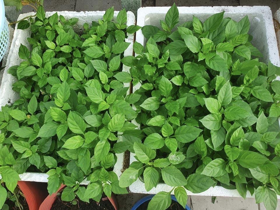 Cửa hàng bán hạt giống rau ăn nên làm ra, phát tài trong mùa dịch - 3