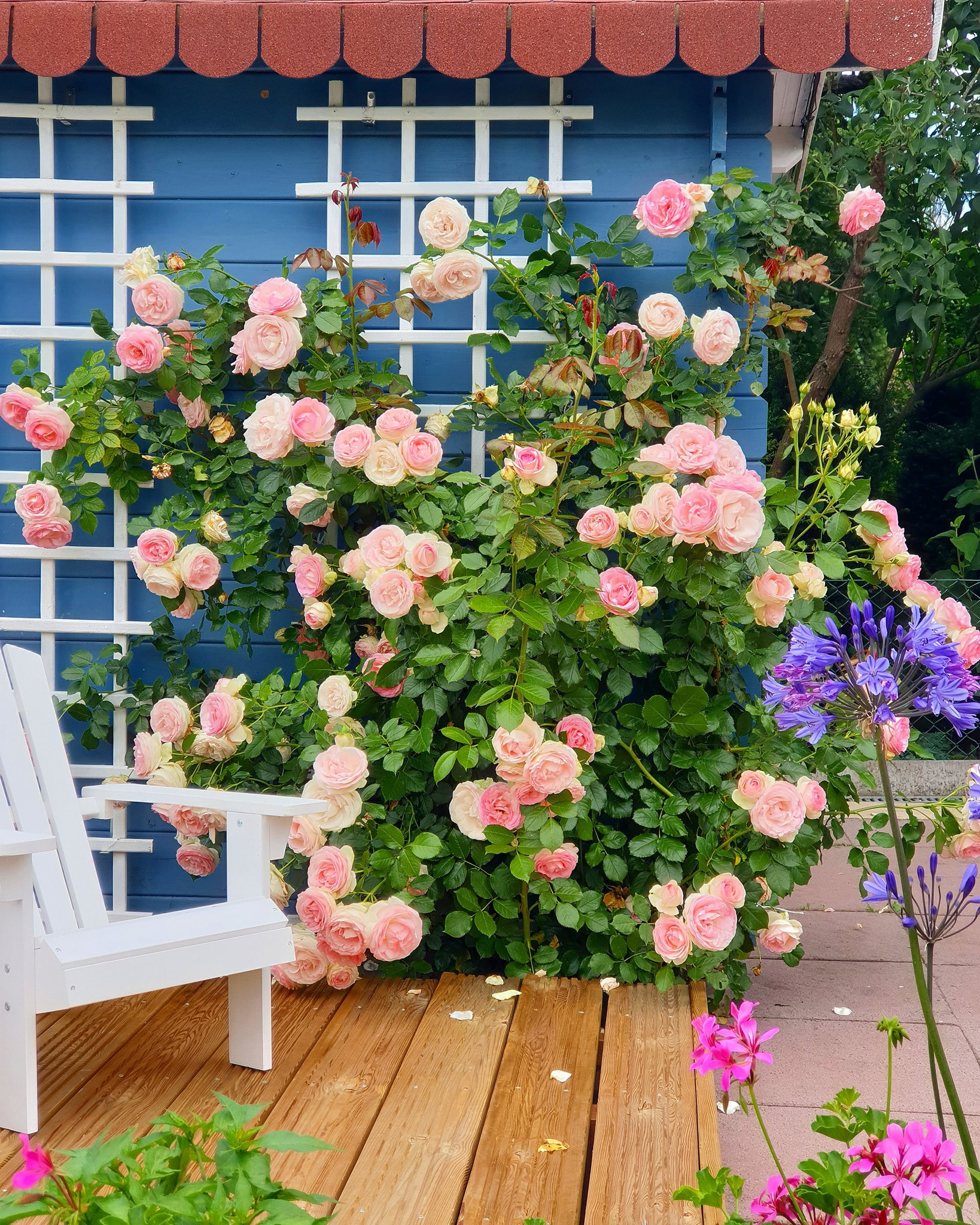 Mãn nhãn nhà vườn triệu bông hồng đẹp như cổ tích của mẹ Việt ở Đức - 4