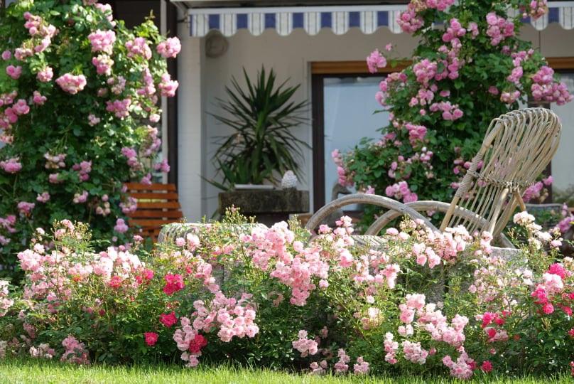 Mãn nhãn nhà vườn triệu bông hồng đẹp như cổ tích của mẹ Việt ở Đức - 1