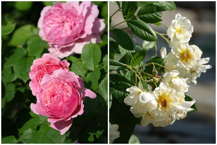 Mãn nhãn nhà vườn triệu bông hồng đẹp như cổ tích của mẹ Việt ở Đức - 5