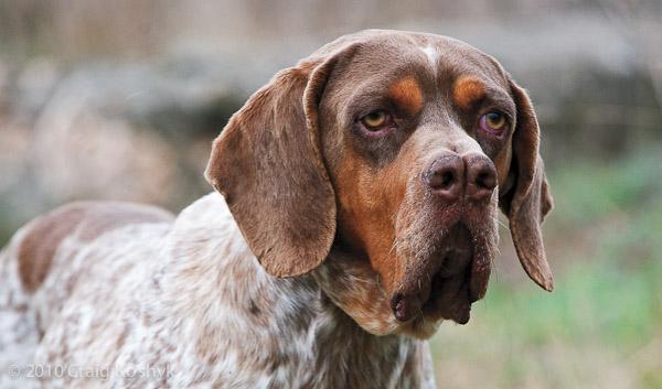 Giống chó kỳ lạ có tận 2 mũi ở Bolivia - 3