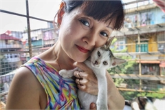 Hanoi woman offers home to abandoned cats