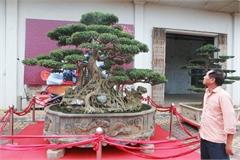 Độc đáo sanh cổ hình thuyền rồng của vua Lý Thái Tổ trả 6 tỷ đồng không bán