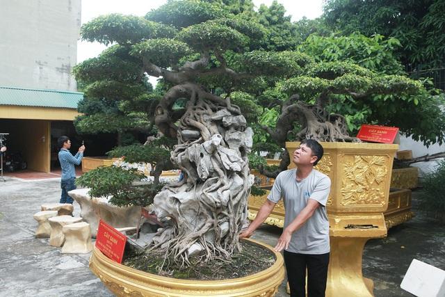 Chiêm ngưỡng cặp sanh cổ 'mọc ngược' giá 10 tỷ đồng của nữ đại gia Phú Thọ