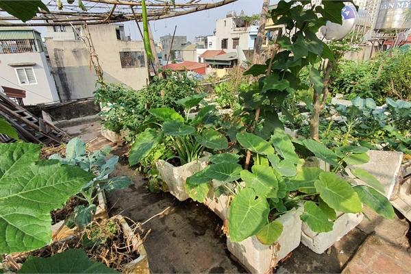 """Độc đáo """"nông trại"""" trồng rau, nuôi gà trên sân thượng, giữa lưng trời ở Hà Nội"""