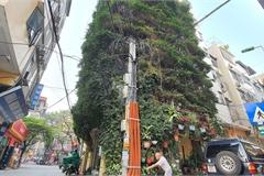 Nhà cây 5 tầng phủ kín hoa giấy ở Hà Nội, ai đi qua cũng dừng lại ngắm