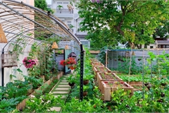 Bỏ 50 triệu cải tạo vườn chuối thành khu sinh thái trong mơ