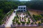 Chiêm ngưỡng nhà vườn toàn siêu cây bạc tỷ của ông vua cây cảnh