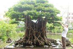'Báu vật ẩn mình' có tuổi đời 500 năm ở Hà Nội, trả 100 cây vàng không bán