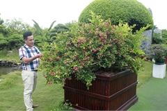 Dàn sơ ri bonsai cổ thụ, trĩu quả giá tiền tỷ của 'tướng cướp hoàn lương'