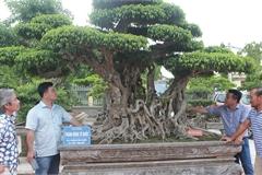 Đã mắt với vườn sanh cổ triệu USD của 'đại gia nông dân' Hà Nội