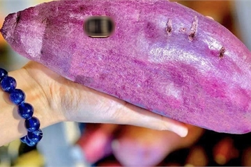 """Đắt gấp 2 lần thịt bò Mỹ, khoai lang """"xách tay"""" từ Nhật giá hơn nửa triệu đồng/kg"""
