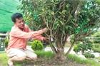 'Đã mắt' với những cây trà cổ thụ tiền tỷ của 'ông vua trà' Việt Nam