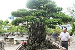 Sanh cổ 'Ngũ long tranh châu' mua từ năm 1996 với giá 100 cây vàng