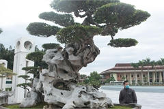 Ngỡ ngàng với huyền thoại sanh cổ ký đá kỳ vĩ nhất Việt Nam