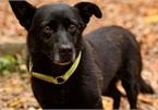 Chú chó mù tìm về với chủ sau hành trình 5 ngày gần 30km