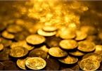 Đi ngắm chim bất ngờ tìm thấy hũ tiền vàng trị giá hơn 25 tỷ đồng