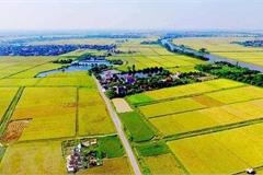 5 kinh nghiệm đầu tư đất nông nghiệp an toàn, sinh lời