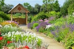 Cặp vợ chồng biến mảnh đất khô cằn thành vườn hoa vạn người mê sau 20 năm