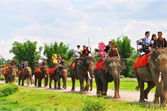 Độc đáo lễ bắt rể cho con gái bằng 14 chú voi 'khủng' ở Tây Nguyên