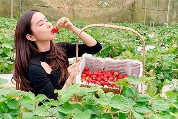 Bỏ việc, cắm sổ đỏ đi trồng dâu tây: Đón 3 vạn khách, thu 3 tỷ đồng mỗi năm