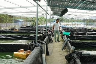 Cất bằng đại học đi nuôi cá chạch lấu, kỹ sư 'đút túi' gần 2 tỷ đồng/năm