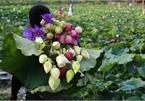 Thăm đầm sen ở Hà Nội có đến 167 loài, đa dạng nhất Việt Nam