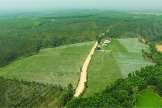 Người dân Quảng Trị thu hàng tỷ đồng nhờ trồng những giống cây ít ai biết